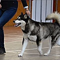 HIGHLANDS PHANTOM - ALASKAN MALAMUTE -