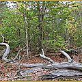 Assemblée générale des propriétaires forestiers