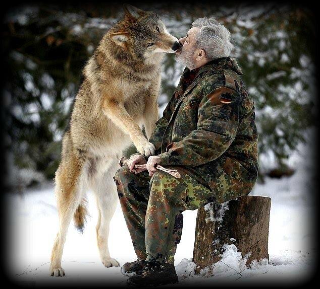 loup baiser2