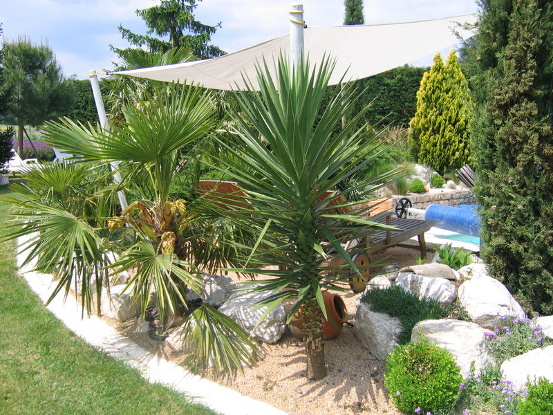 Autour de la piscine par jcgb au jardin for Comment planter un palmier en pot