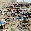 ماهي حكاية المدونين الأجانب إلي تحب تستدعاهم وزيرة السياحة من أجل الترويج إلى تونس؟