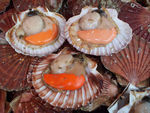 CoquillesStJacques
