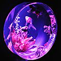 Aquarium Art - Nihonbashi, <b>Tokyo</b>