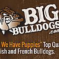 BigBulldogs