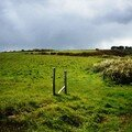 Sauzon champ