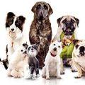 Palace pour chiens au cinéma!