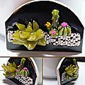Cactus et Plantes grasses!