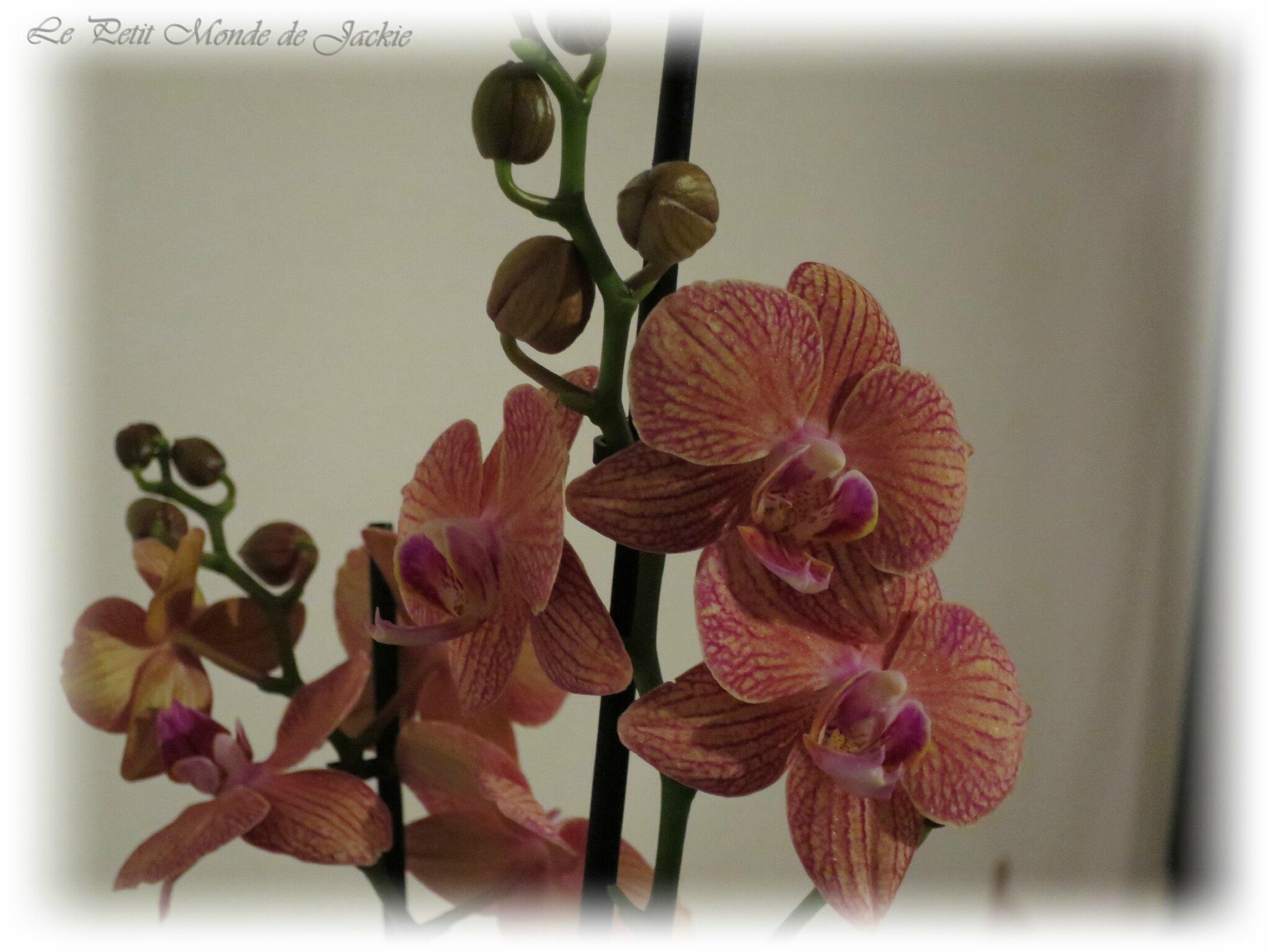 Orchidée maison