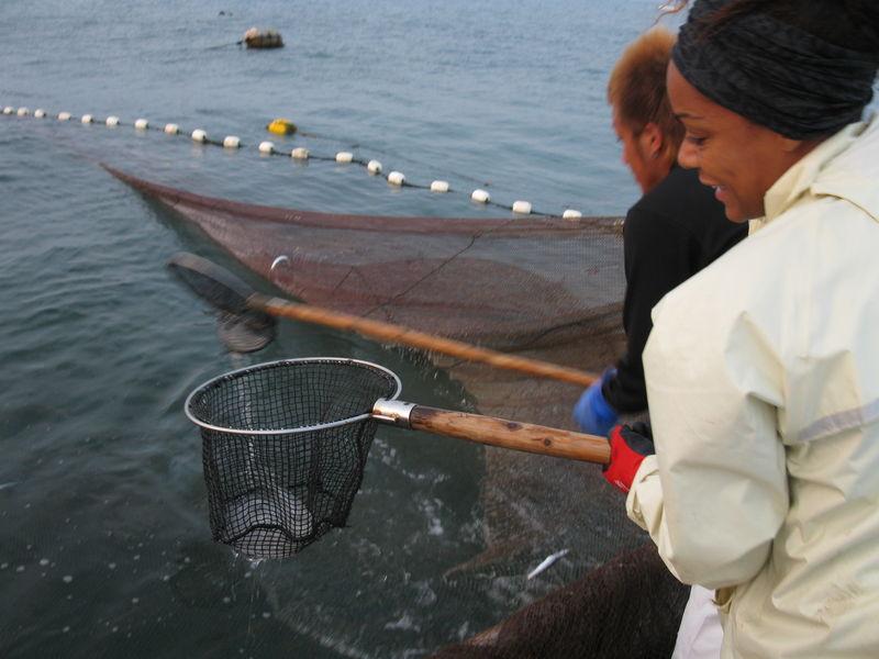 Moi, en train d'enlever les mangeurs de poissons: jellyfish!