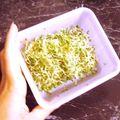 Salade chipolatas, pommes de terre et <b>alfalfa</b>