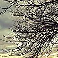 Beauté hivernale - clic clac