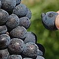 Rencontres viticoles d'aquitaine