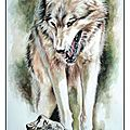 Peinture Loup alpha