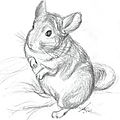 ANIMAUX - N°1 - LE <b>CHINCHILLA</b>