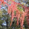 Sos Kiseleff in Autumn