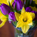 It's beginning to look a lot like ... spring ! daffodil inspiration (vive les jonquilles !)