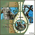 Koalas d'ottoway - 01