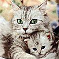 ♠ et à part chat ? de retour bientôt !!!