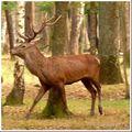 Le seigneur de la forêt...