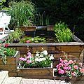 Mon jardin aquatique
