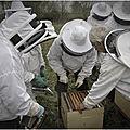 Protéger l'<b>abeille</b> <b>noire</b> dans la nature - portrait du Conservatoire de l'<b>abeille</b> <b>noire</b> de l'Orne