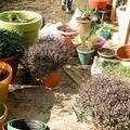 71_plantes