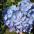 Fleurs 2009 (14)
