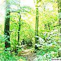 En forêt d