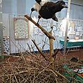 Expositions ornithologique