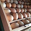 Casier pour les œufs de nos poules