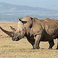 rhinocerosb55e2a857_c