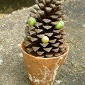 Une drole de pigne de pin