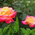 fleurs 062