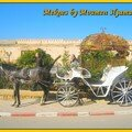Caléche de Meknes