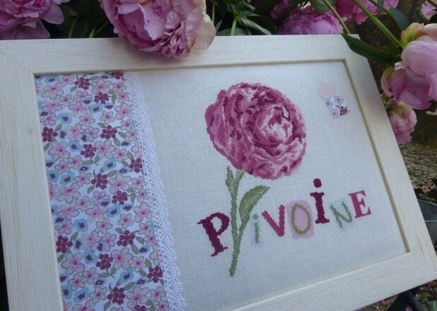 Pivoine Lili points