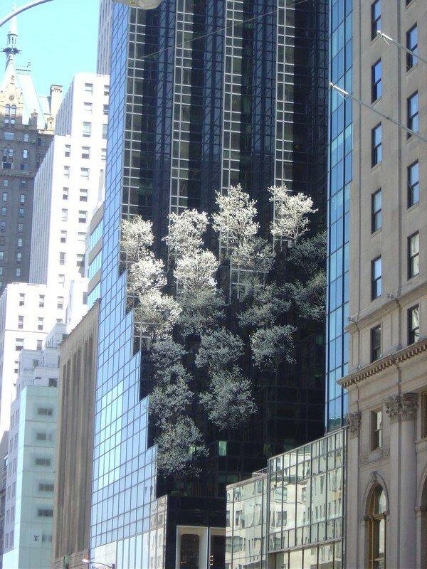 Esculape New York USA (5)