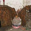 Les fetiches ancestrales de dieux legba qui vomir largent de maitre ola