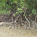 Racines (roots) c'est à lire