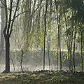 Nouveau bulletin météo: brumes matinales ce matin à lizant.