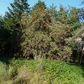 2009 09 08 Nature a l'approche de l'automne