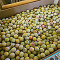 Le <b>fruit</b> lorrain