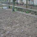 2008 04 11 Le jardin
