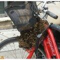 Les abeilles et le vélo Nancy