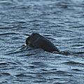 U-boot : si rares et si discrets