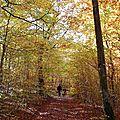 La balade du dimanche : à la cueillette des champignons dans la forêt comtoise par une belle journée d'automne