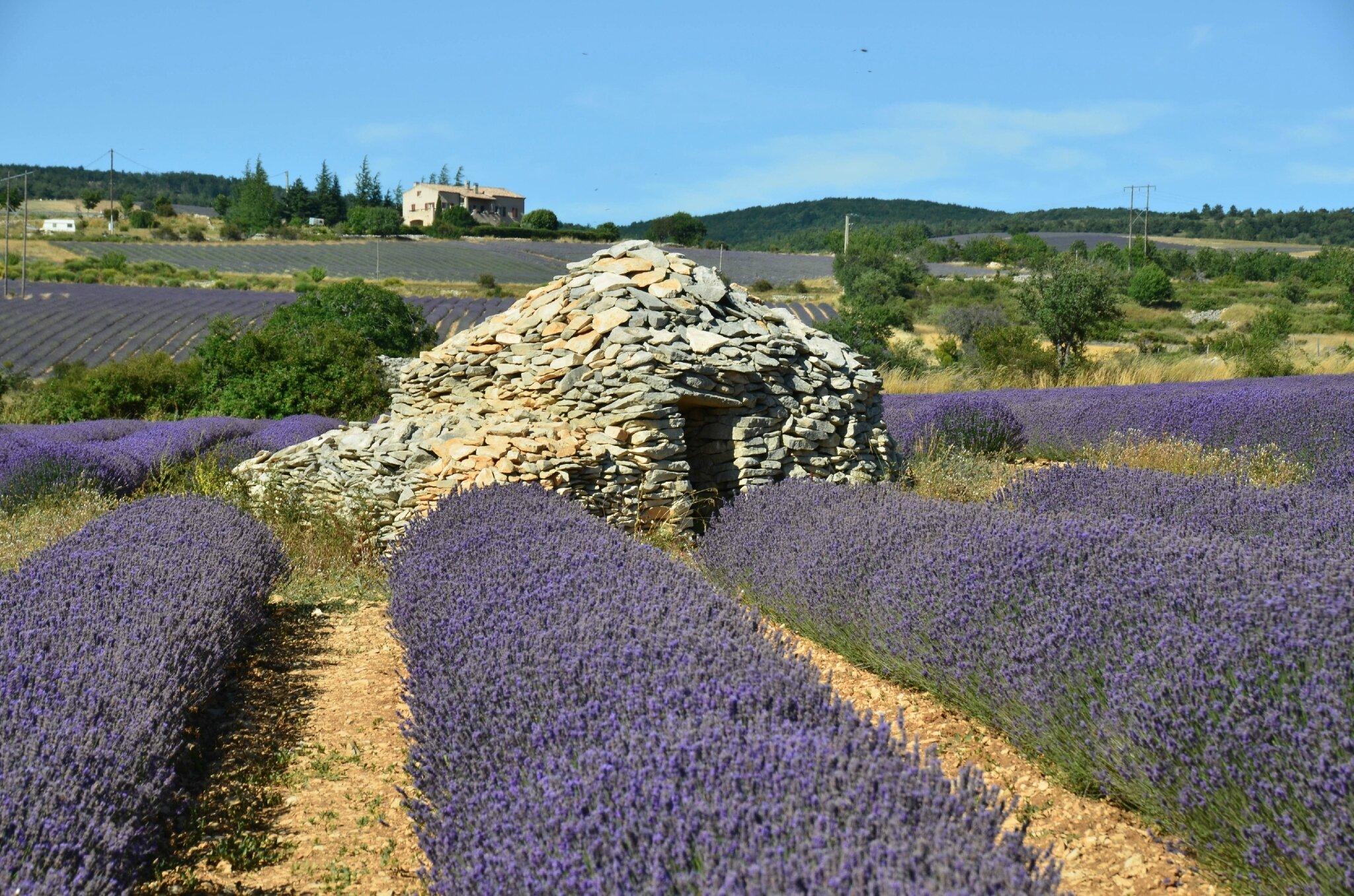 Fête de la lavande, en Drôme provençale