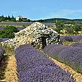 Fête de la <b>lavande</b>, en Drôme provençale