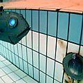 Rencontre submarine RC.-08-