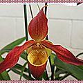 MIEL VERT (5/7) - Bienfaits des <b>fruits</b> <b>secs</b> - Recette : Blanc de volaille poché à l'orchidée au fenouil et à la courgette
