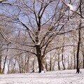 Charme, agglomération de Rouen, février 2006